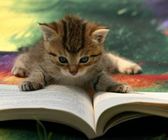 learning cat